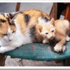 飼いやすい猫の種類おすすめランキングBEST5は?初心者の選び方、注意点は?