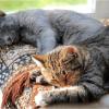 猫のノミを駆除する薬の種類は?安全性や副作用は大丈夫?