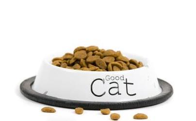 キャットフードの選びかたに注意!主食を間違えると猫の健康を損なう原因に・・