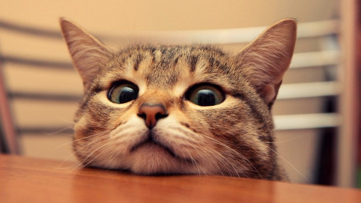 [緊急事態]猫のおしっこが出ない・・原因となっている病気と応急処置。