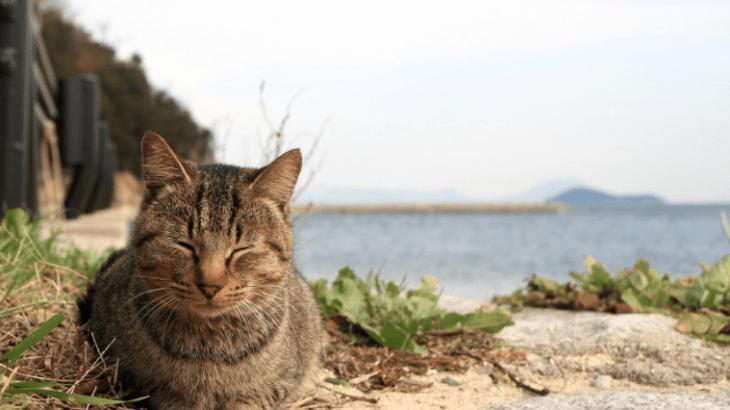 猫の島の善し悪し、香川・男木島 別名猫島の現状から見る共存の方向性