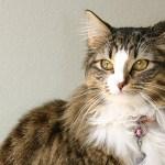 ダレノガレ明美の溺愛する猫の種類って?