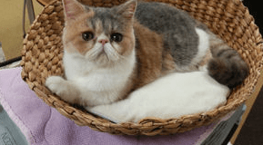 [動画あり]純烈 新曲幸福あそびのPVに出ている猫の正体とは?