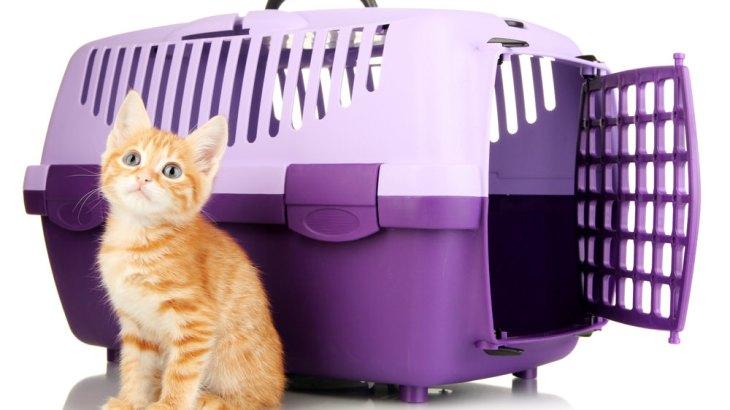 猫の災害対策をしておくべき理由とキャリーケースに慣れさせるコツ