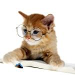 猫をほめるしつけ方、習性を利用して学習してもらうポイントまとめ