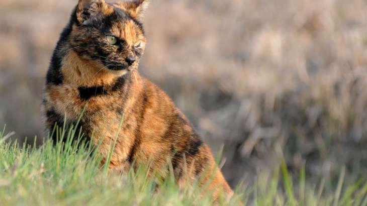 三毛猫・白黒猫・サビ猫など組み合わせ柄の猫たちの性格ってどうなの?