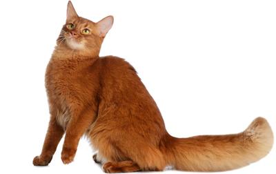 ちょっと変わった柄の猫たちの性格