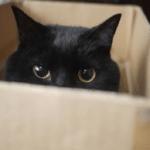 [なぜ入る?]猫が段ボールをかじる・食べる理由と知っておきたい誤食対策