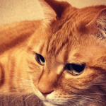 猫がわざと物を落とす意外な2つの理由と効果的なしつけ方法とは?
