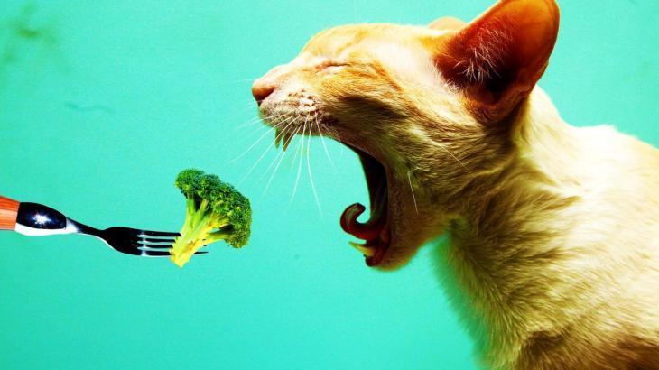 猫に絶対あげてはいけない夏の食材とは?