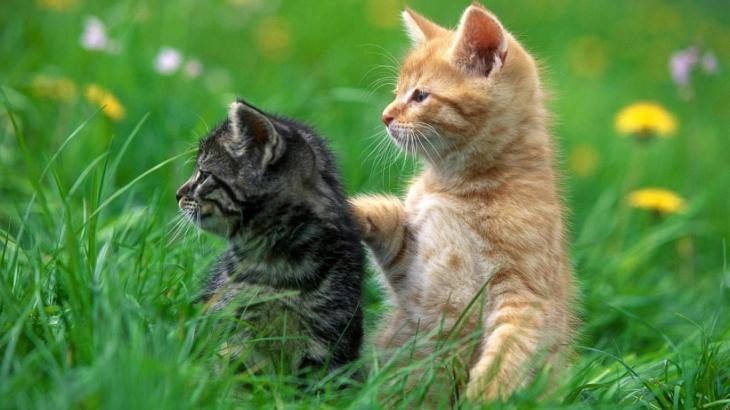 子猫の餌は何を与えたらいいのか?必要な栄養素から見た正しいフード選び