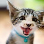 [何かを訴えてる]猫が鳴いて困る時に試したい方法と鳴く理由とは?