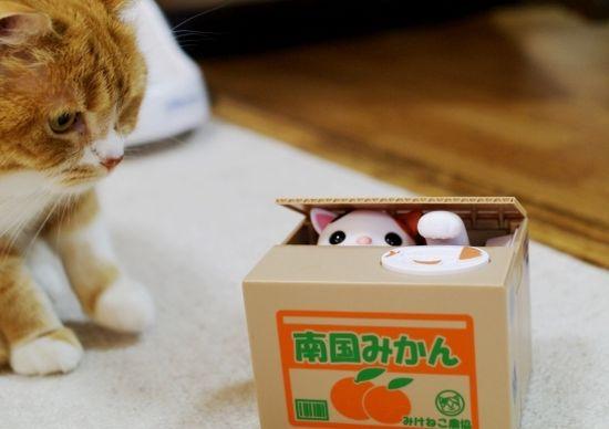 [動画あり]猫が段ボールから出てくる貯金箱を見た猫の反応がこちら・・