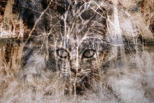 [病気かも?]猫のフケが多い・・知っておくべき原因と対策まとめ