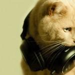 猫が好きな音楽って何?ストレス解消ミュージック