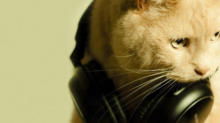 [5分でわかる]猫の好きな音や音楽、嫌いな音の特徴って何?