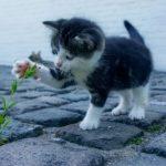 [意外な問題行動の理由]猫の粗相や噛み癖の原因って実は・・