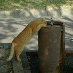 猫の生理的に正常な嘔吐と異常な嘔吐の違いとは?