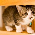[イラストと画像でわかる]猫の表情から読む気持ちと意味まとめ