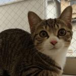 人ん家の心配、保護猫のお腹に虫が大量にいたケース