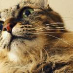 猫の口が臭い!口臭予防をする具体的な方法を数年実践した結果報告