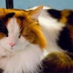 [保存版]猫に懐かれるための戦略3選
