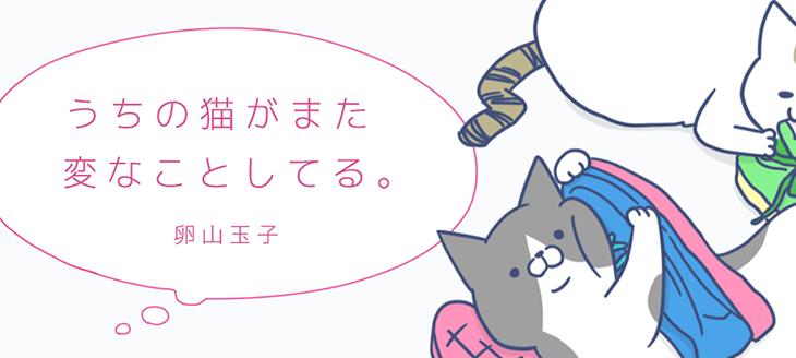 個人的にハマっているおすすめ猫漫画 厳選5作品
