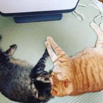 猫は寒さに何度まで対応できるの?知っておきたい冬場対策