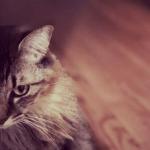 猫にも遠慮がある!?多頭飼いの猫にストレスを溜めさせないためのコツとは?