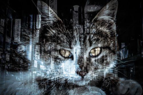 猫に嫌われる理由と行動から考える嫌われるタイプの特徴とは?