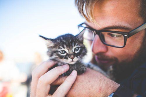 [新説 猫舌]猫は食べ物の温度をどこで感じるの?味覚と触覚の不思議