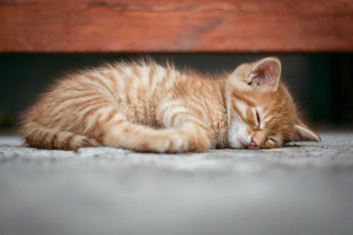 [おひさまのにおい]猫が臭くないのにはわけがあった!?獣臭がしない猫の不思議について