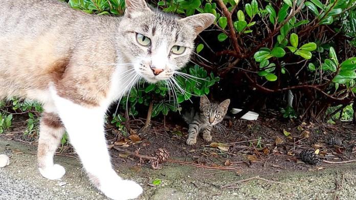 子猫を紹介する猫