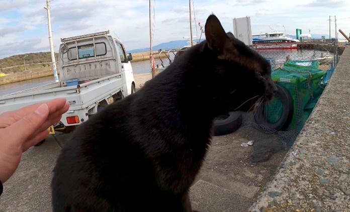 猫のケンカの仲裁に入る男性