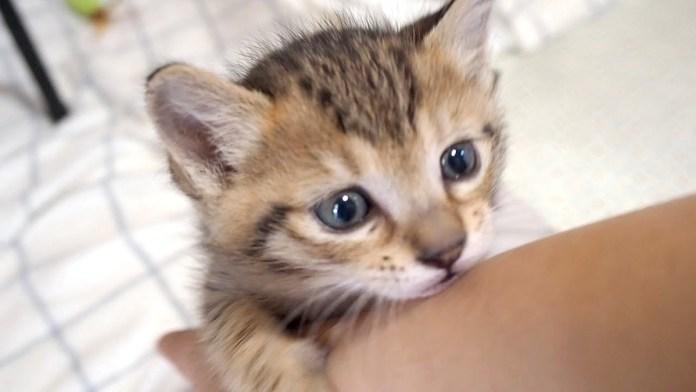 腕にしがみつく子猫