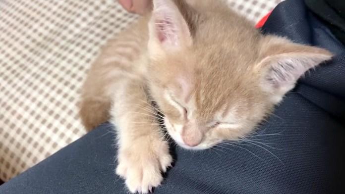 膝に抱きつく子猫