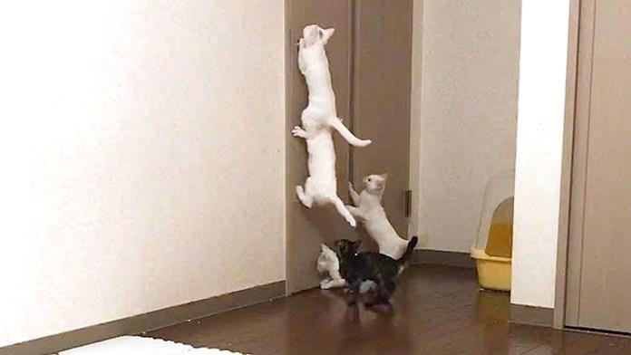 ドアに飛びつく子猫達