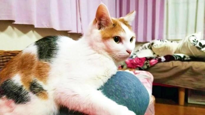 膝にしがみつく猫