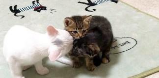 戸惑い気味の子猫
