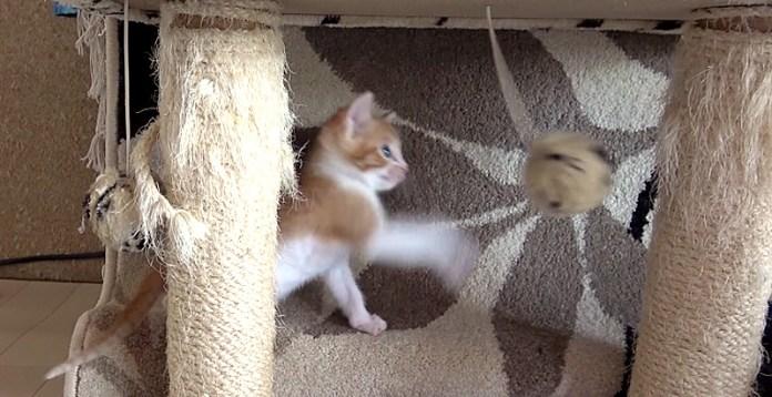 猫パンチの練習をする子猫