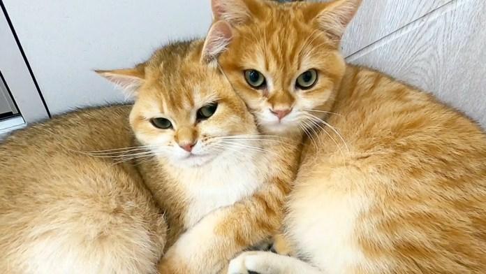 妹をギュッとする兄猫
