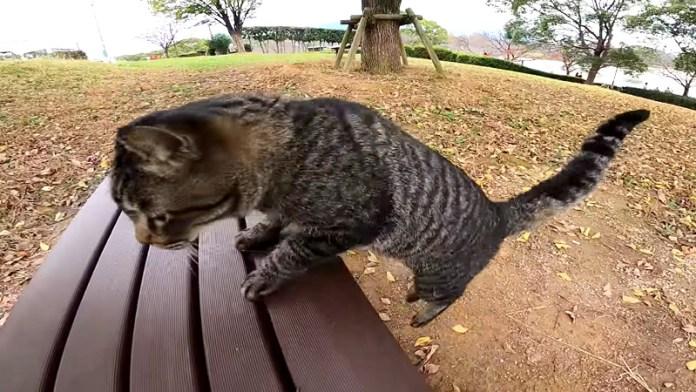 ベンチに飛び乗る猫