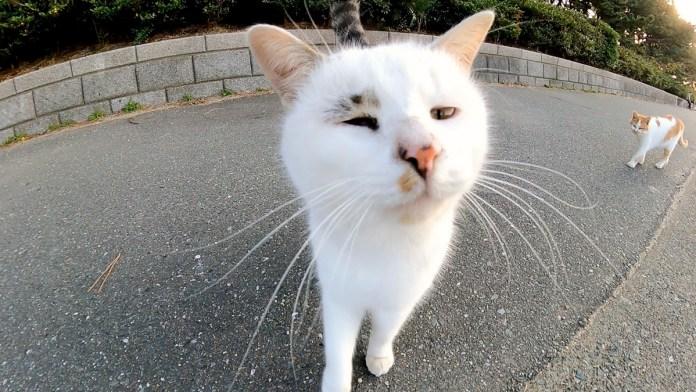変わった模様の猫