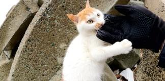 カミカミする子猫