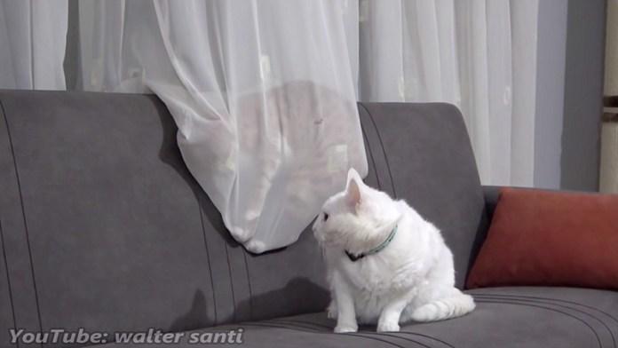 カーテンで眠る猫