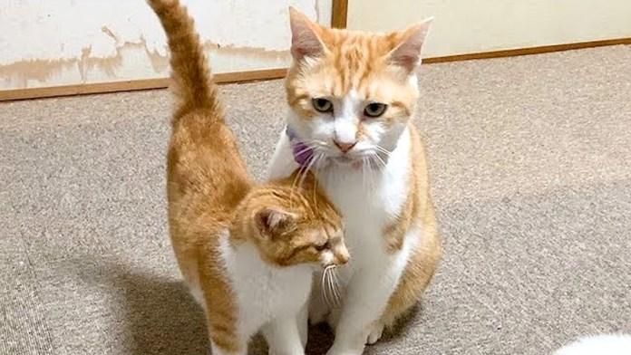 先住猫に猛アプローチする子猫