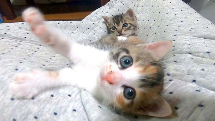 膝の上の子猫達