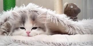 眠たそうな子猫