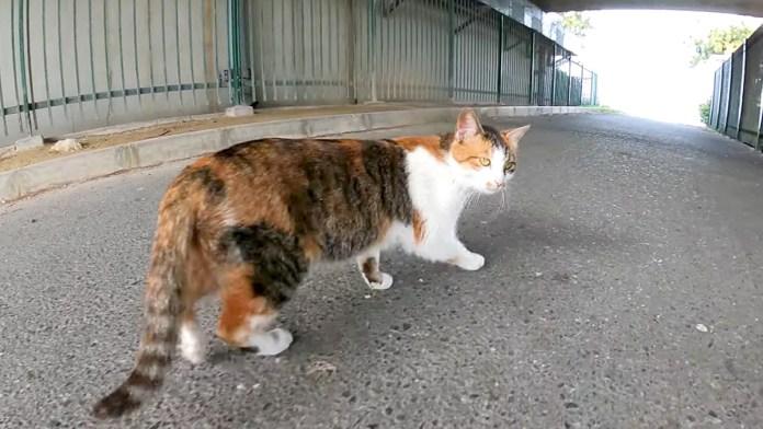 案内する猫