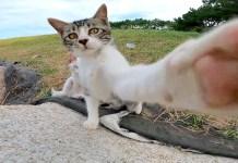 猫パンチする子猫
